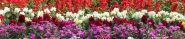 cropped-flowers2902.png